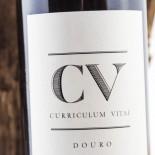 Cv Curriculum Vitae